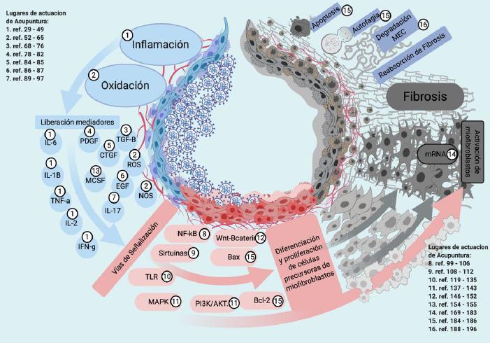 Acupuntura y Fibrosis post-COVID19